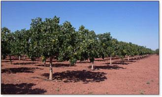 Pistachio Groves Heart Of The Desert Pistachios And Wines Heart Of The Desert
